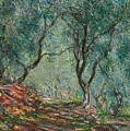 Olive Trees In The Moreno Garden by Claude Monet