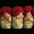 Olivia, Alice, Hugo, Imogin-rose & Mya As Roses by Anne Geddes
