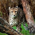 On The Prowl by Heather Thorning