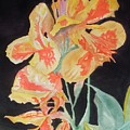 Orange And Yellow Canna Lily On Black by Warren Thompson