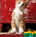 Orange Tabby Kitten In Red Drawer  by Garry Gay