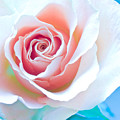 Orange White Blue Abstract Rose by Artecco Fine Art Photography