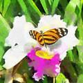 Orchid And Butterfly by Anthony Caruso