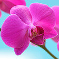 Orchid At The Ocean Closeup by Michi Sherwood