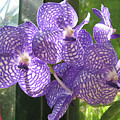 Orchid by Darren Stein