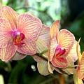 Orchid Delight by Karen Wiles