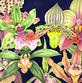 Orchids  by Lucy Arnold