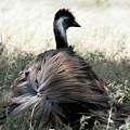 Ostracized Ostrich by Douglas Barnard