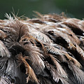 Ostrich Feathers by Teresa Blanton