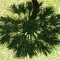 Palm Shadow by Richard Mansfield