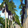 Palms by Jose Manuel Abraham