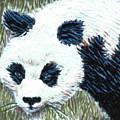 Panda by Dy Witt