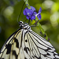 Paper Kite Butterfly by Heather Applegate