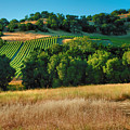 Paso Robles Vineyard by Steven Ainsworth