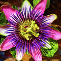 Passion Flower by Mariola Bitner