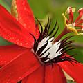 Passionate Flower by Heiko Koehrer-Wagner