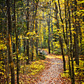 Path In Fall Forest by Elena Elisseeva