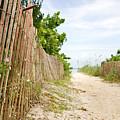 Path To The Beach by Matt Tilghman