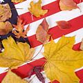 Patriotic Autumn Colors by James BO  Insogna
