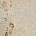 Paw And Footprints 2 by Brandon Tabiolo - Printscapes