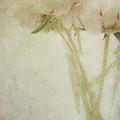 Peonies by Marion Galt