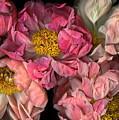 Petticoats by Christian Slanec