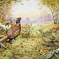 Pheasants In Woodland by Carl Donner