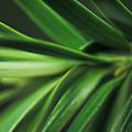Pine Needles by Ryan Kelly