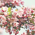 Pink Apple Blossoms by Sandra Cunningham