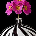 Pink English Primrose by Garry Gay