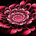 Pink Flower by Anastasiya Malakhova