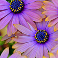 Pink Petals And Blue Buttons by Julie Palencia