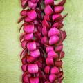 Pink Plumeria Lei by Jade Moon