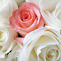 Pink Rose Among White Roses by Garry Gay