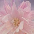 Pink Whisper by Bonnie Bruno