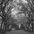 Poets Walk In Central Park by Christopher Kirby