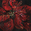 Poinsettia by Nadine Rippelmeyer