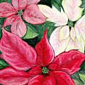Poinsettia Pastel by Nancy Mueller