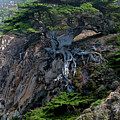 Point Lobos Veteran Cypress Tree by Charlene Mitchell