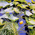 Pond Lilies by Sharon Freeman