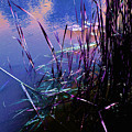 Pond Reeds At Sunset by Joanne Smoley