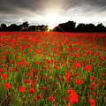 Poppy Field At Sunset by Doug Chinnery