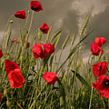 Poppy Field Before The Storm by Floriana Barbu
