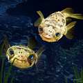 Porcupine Puffer  by Thanh Thuy Nguyen
