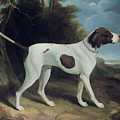 Portrait Of A Liver And White Pointer by George Garrard