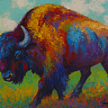 Prairie Muse - Bison by Marion Rose