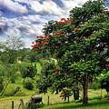 Pretty Countryside by Kaye Menner