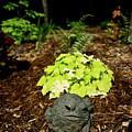 Private Garden Go Away by Douglas Barnett