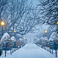 Public Garden Walk by Susan Cole Kelly