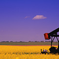 Pumpjack In A Canola Field by Carson Ganci